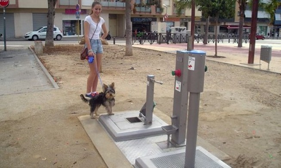 Toilet công cộng dành cho chó đầu tiên trên thế giới