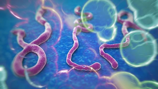 TP.HCM: Tăng cường phòng chống bệnh Ebola