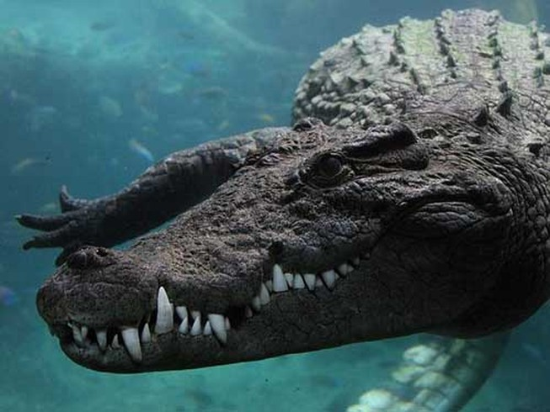 Bà mẹ quyết chiến với cá sấu, giải cứu con