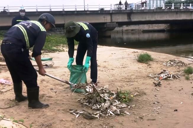 Cá chết nổi trắng cửa sông trôi ra biển ở Đà Nẵng