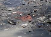 Rơi máy bay Indonesia: Vớt được 10 thi thể, không có phép màu…