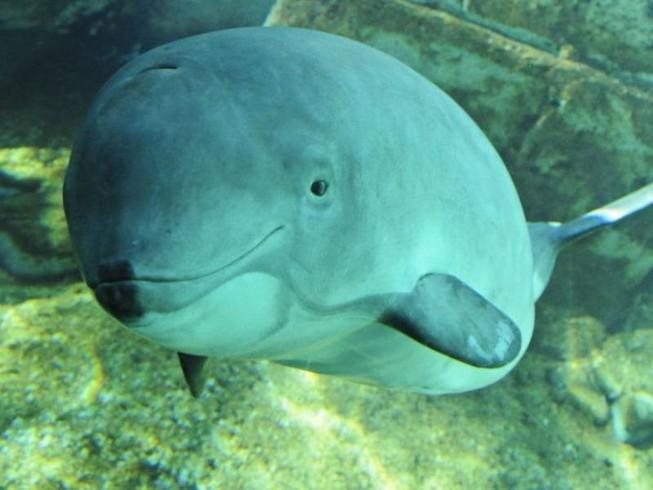 18 chú cá heo quý chết ở biển Baltic sau khi NATO tập trận