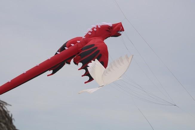 Ảnh: Độc đáo 'động vật biển' bay lên trời