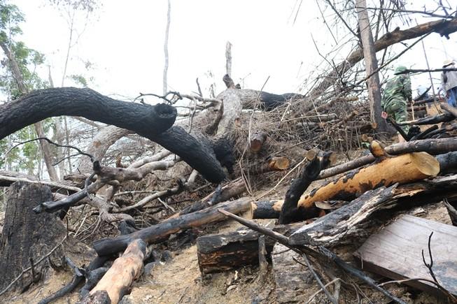Khởi tố 1 bị can trong vụ phá hơn trăm ha rừng