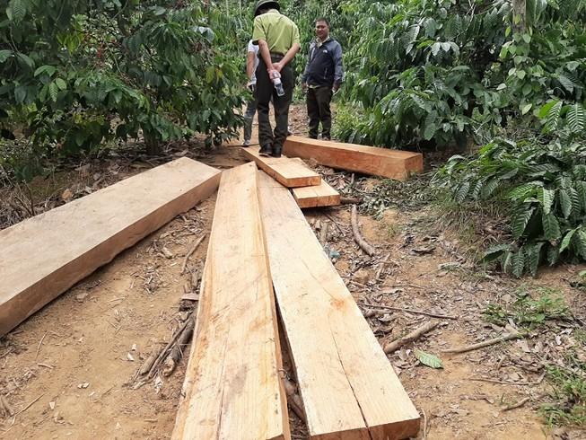 Phát hiện nhiều điểm tập kết gỗ ở rừng đặc dụng Nam Kar