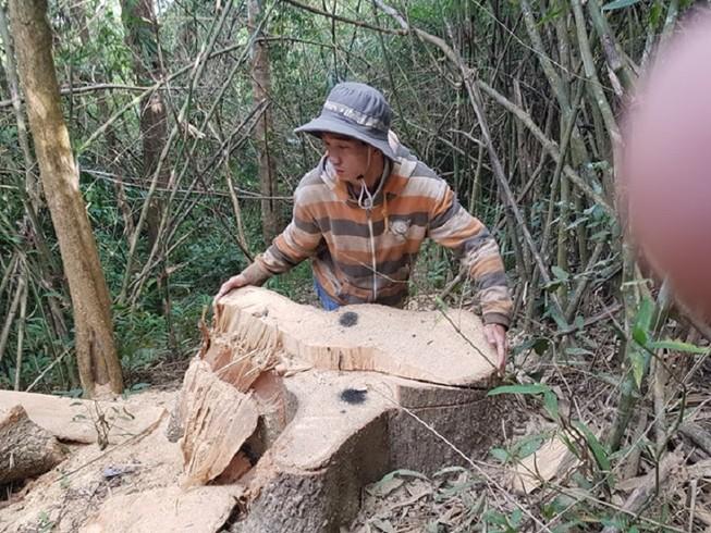 Sở Nông nghiệp nêu trách nhiệm vụ phá rừng đặc dụng Nam Kar