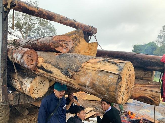 Lại phát hiện phá rừng quy mô lớn ở Đắk Lắk
