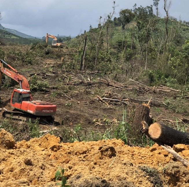 Khởi tố vụ phá rừng bằng máy múc ở Lâm Đồng