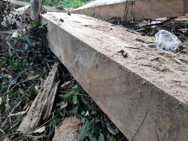 Phát hiện nhiều điểm tập kết gỗ trái phép ở Đắk Lắk