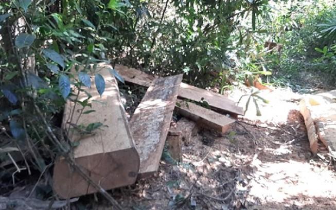 Hiện trường vụ phá rừng xảy ra tại xã Hải Yang. Ảnh: AH
