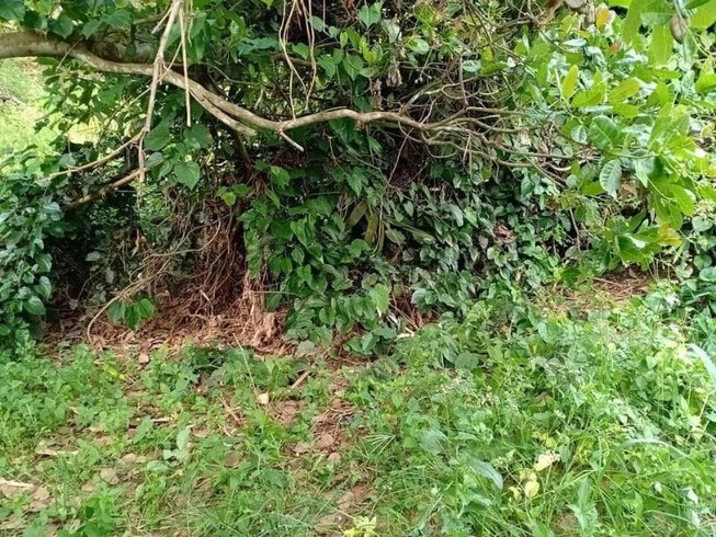 Tá hỏa phát hiện bộ xương người không đầu tại Bình Phước