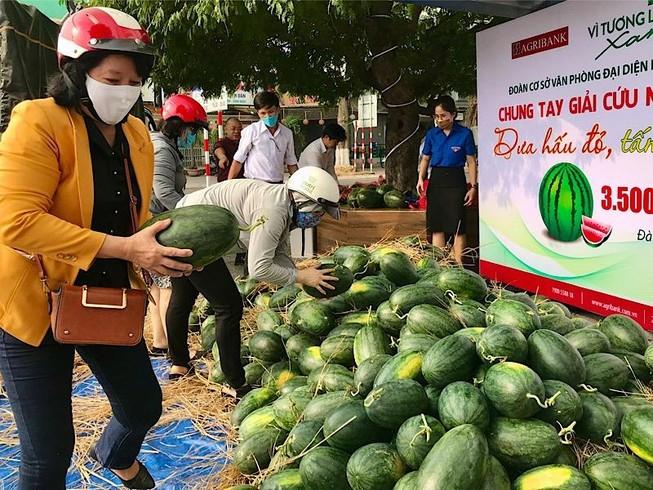 Agribank miền Trung bán dưa hấu cho nông dân Quảng Ngãi