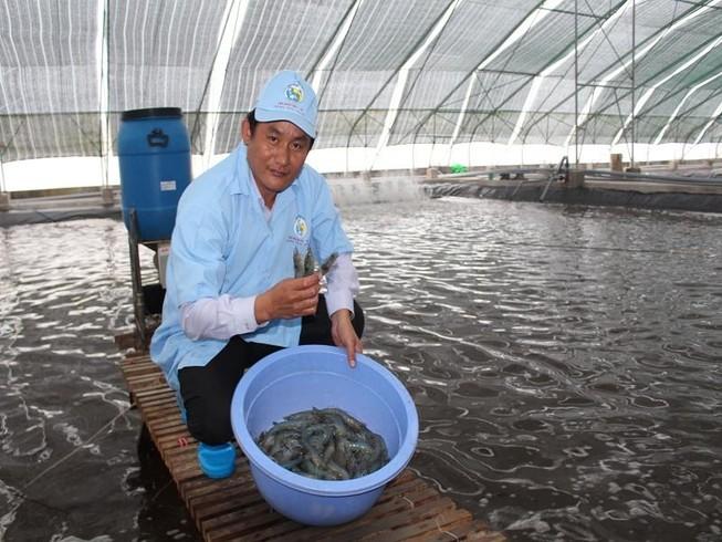Thu hoạch tôm siêu thâm canh ở Bạc Liêu