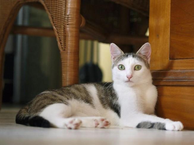Giết 21 con mèo, ngồi tù 16 năm