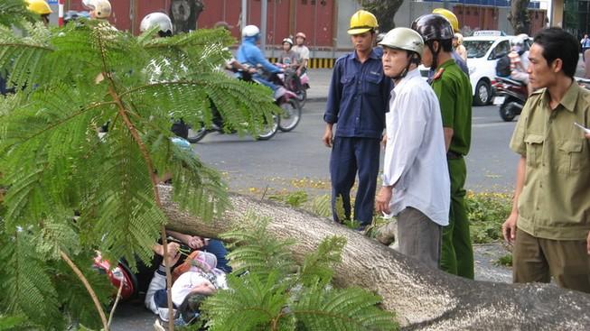 Đi học qua đường Lê Duẩn, 2 nữ sinh bị cây gãy đè