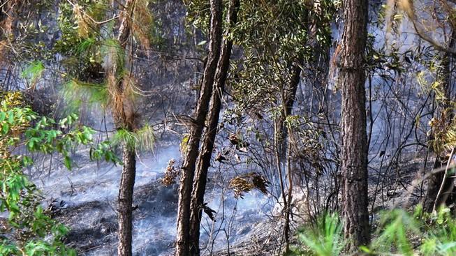 Rừng thông vẫn cháy dữ dội, 500 người dập lửa xuyên đêm