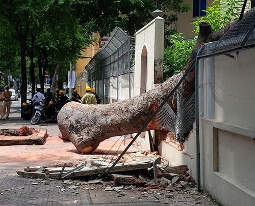 Cây cổ thụ đổ sập vào hàng rào trụ sở Lãnh sự quán Nga