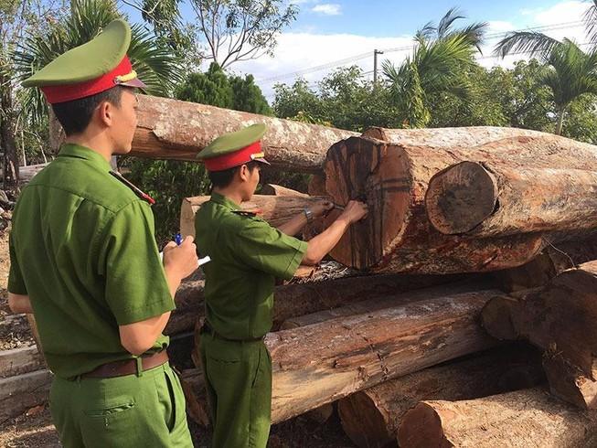 Xưởng chế biến gỗ không phép nằm sát bìa rừng