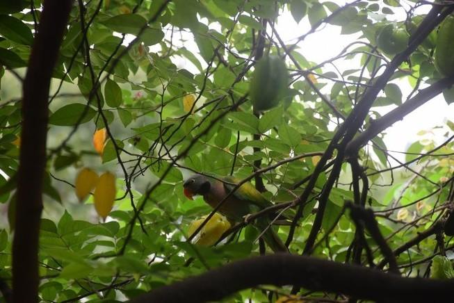 Thưa dần tiếng chim hót ở Sài thành