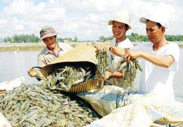 Rộng đường xuất khẩu tôm vào Mỹ