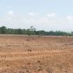 Tà Cú, Bình Thuận: Gần 100 ha rừng bị phá sạch!