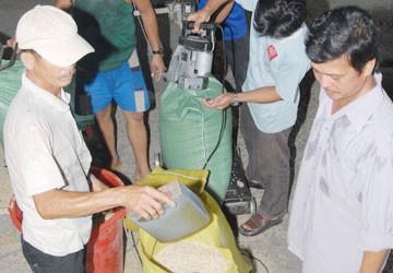Giáo sư Võ Tòng Xuân: Độc quyền, giá gạo sẽ còn rớt thê thảm