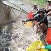 Liên kết việc sản xuất và tiêu thụ cá tra