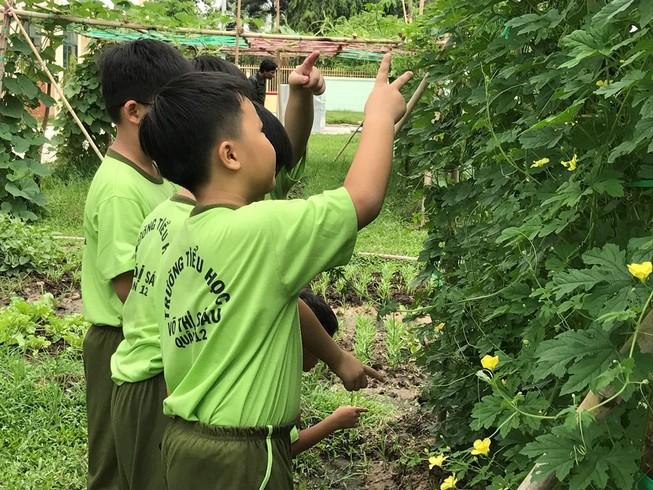 Cảnh báo: cây cảnh trong trường học có thể gây ngộ độc