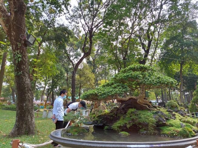 Bịt khẩu trang du xuân ngắm kì hoa dị thảo ở công viên Tao Đàn