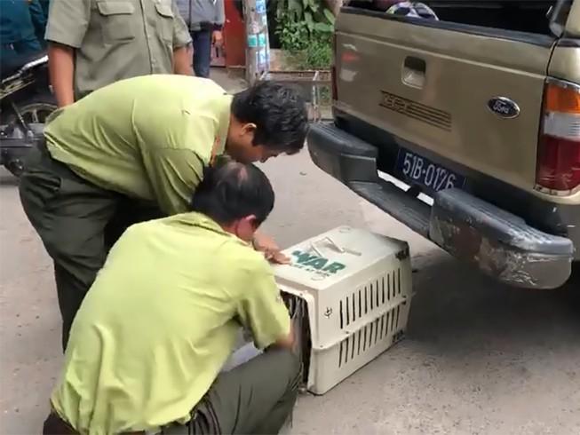 Đã bắn thuốc mê được 6 con khỉ trong đàn khỉ 'đại náo'