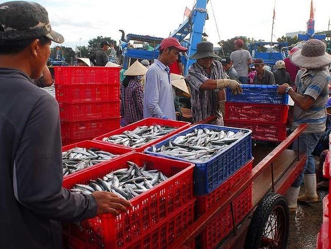 Giải tỏa bế tắc cho hơn 5.000 tấn cá kẹt tại cảng