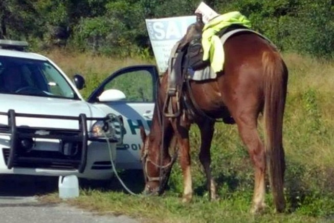 Cưỡi ngựa khi uống bia say xỉn vẫn bị cảnh sát phạt nặng