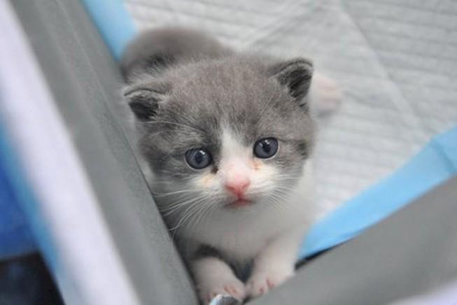 1 phụ nữ Nga bị bắt giữ do nuôi quá nhiều mèo? | Xem-nghe-đọc | PLO