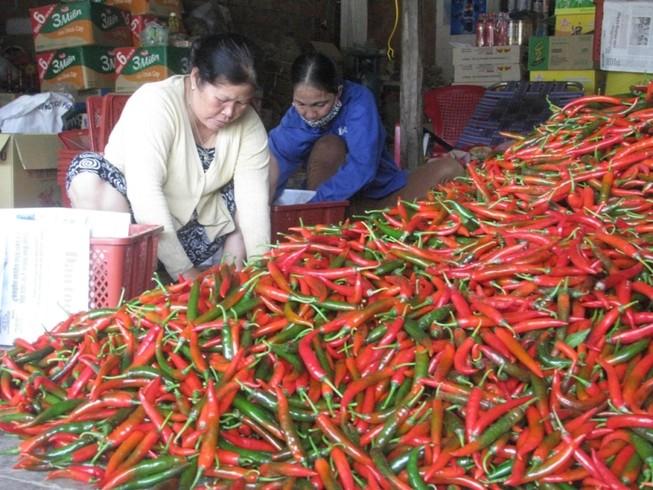 Trái ớt Việt Nam bất ngờ bị Malaysia 'chê'