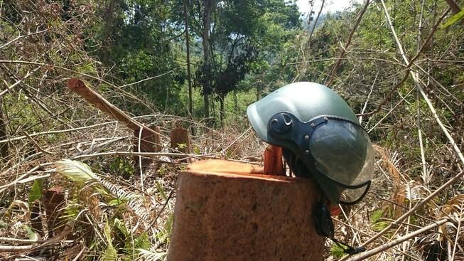 Công an đi kiểm tra vụ phá rừng trên đồi Kumagai