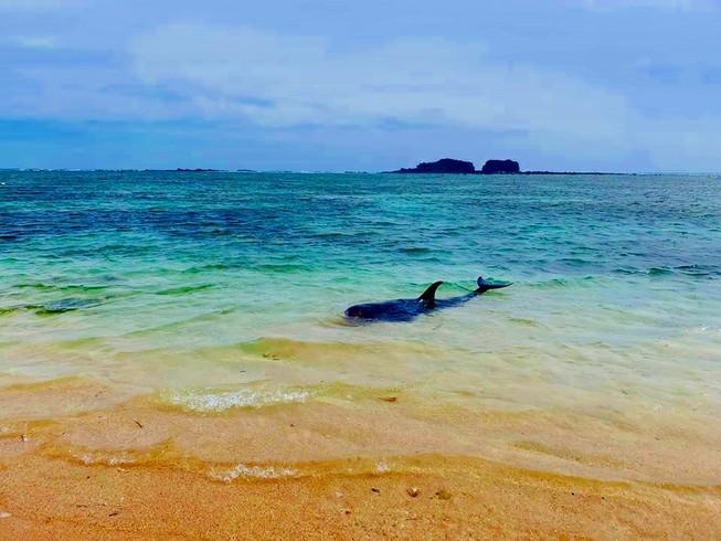 Dân tổ chức hò bá trạo để cá bà chuông về biển mà bất thành