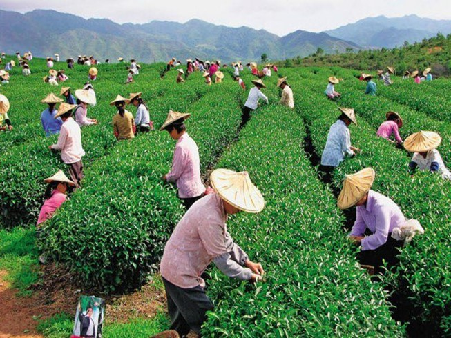 Đài Loan tiếp nhận lao động ngành nông nghiệp từ đầu năm nay