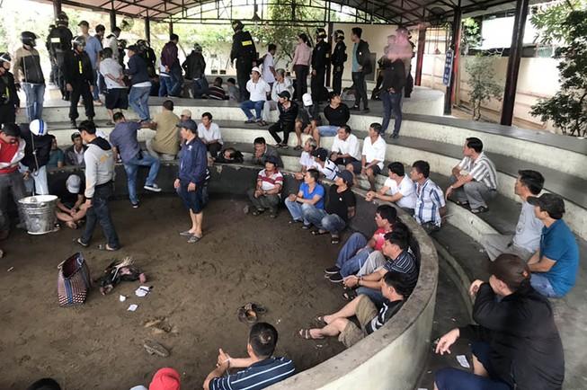 Bắt giam 13 người sát phạt bằng đá gà ở Phú Yên