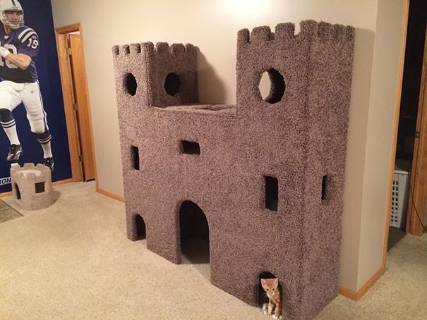 Những chú mèo có mức sống thượng lưu - ảnh 4