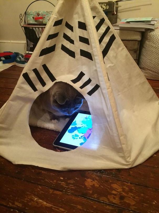 Những chú mèo có mức sống thượng lưu - ảnh 14