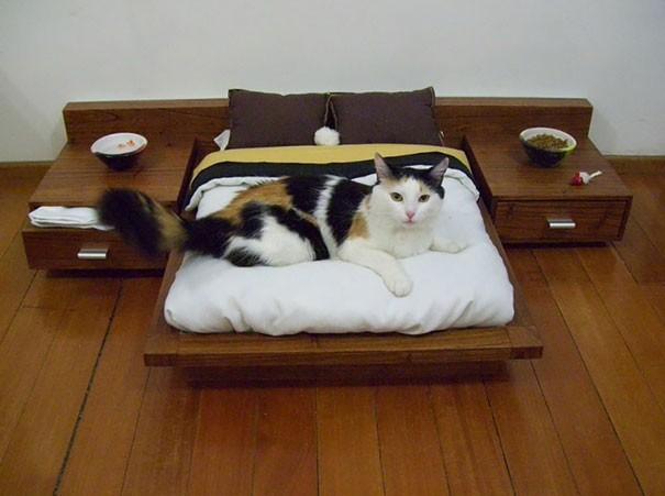 Những chú mèo có mức sống thượng lưu - ảnh 7
