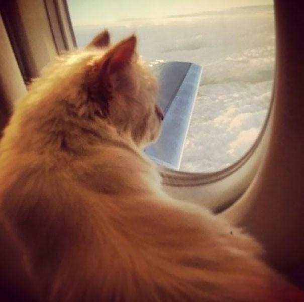 Những chú mèo có mức sống thượng lưu - ảnh 8