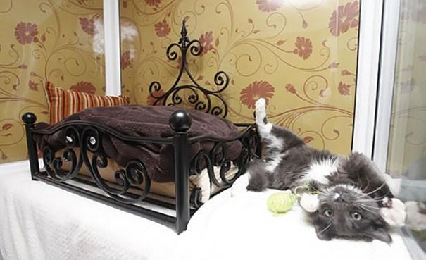 Những chú mèo có mức sống thượng lưu - ảnh 10
