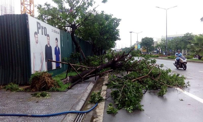 Hàng loạt cây xanh ở Huế bị quật gãy trong đêm - ảnh 3