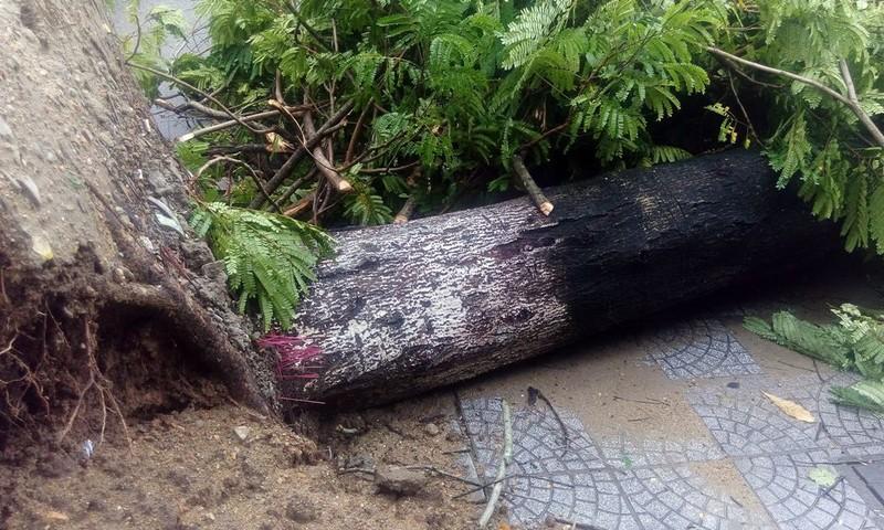 Hàng loạt cây xanh ở Huế bị quật gãy trong đêm - ảnh 5