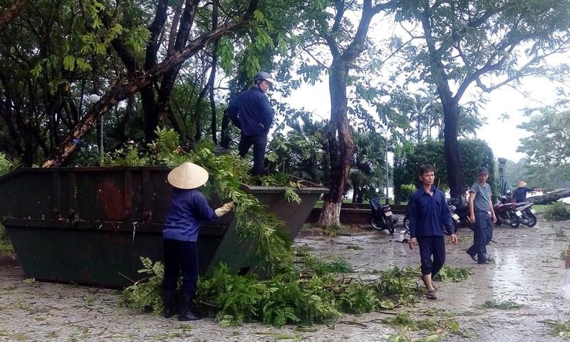 Hàng loạt cây xanh ở Huế bị quật gãy trong đêm - ảnh 6
