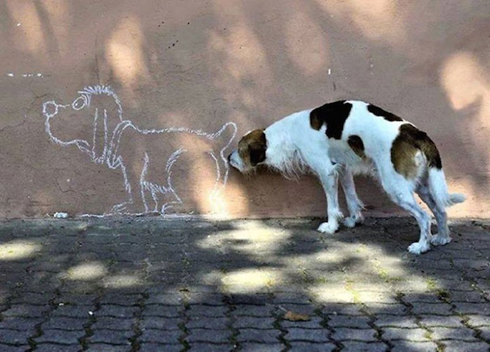 Thích thú với những hình ảnh ngẫu nhiên trên đường phố - ảnh 7