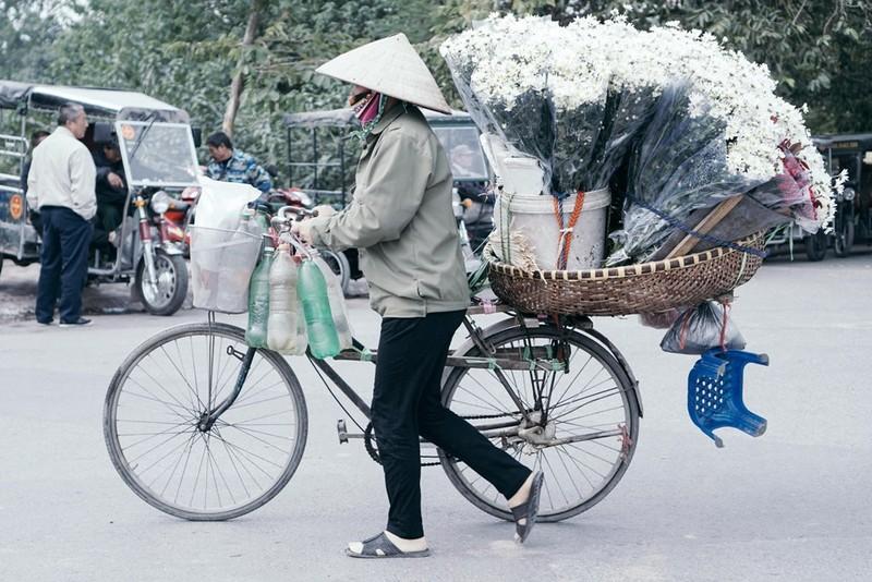 Trên phố phường Hà Nội, không khó để bắt gặp những xe chởcúc hoạ mi nhuư thế này