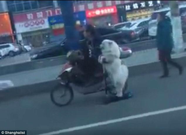 Há hốc mồm với chú chó lái scooter trên phố - ảnh 1