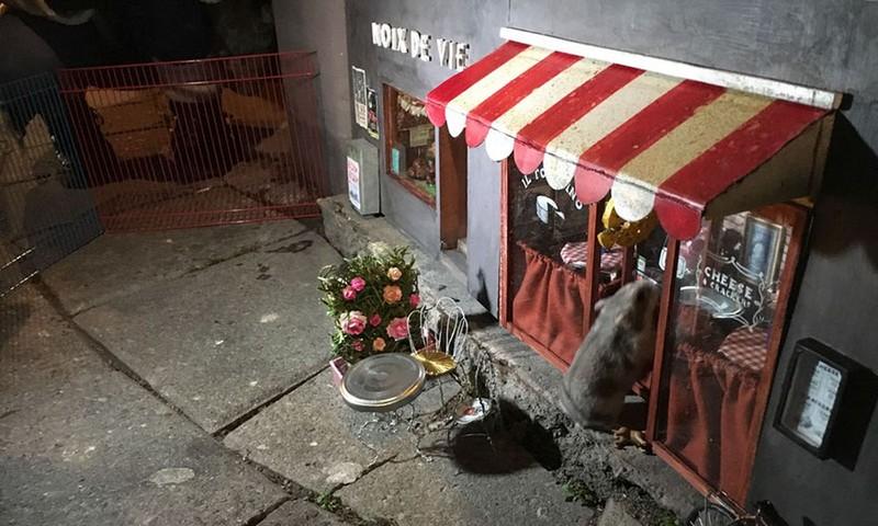 Ngộ nghĩnh những ngôi nhà chuột trên phố Thụy Điển - ảnh 5